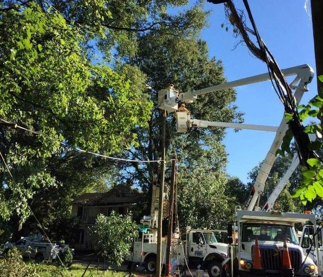 Two large work trucks with cranes lift workers to telephone poles in Mordecai Neighboorhood