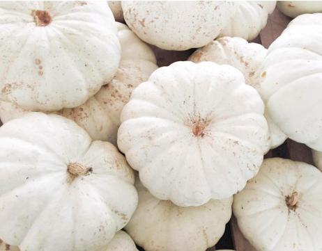 A pile of white pumpkins